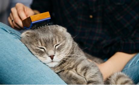 Kediler Neden Tüy Döker?