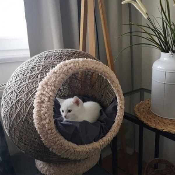 Kahverengi Kedi Yatak-Tırmalar